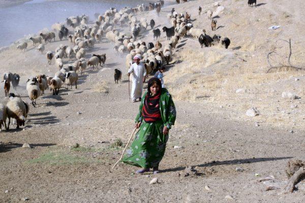 Am Fuße des Zagros-Gebirge (Iran) - Copyright: Paola Sconzo
